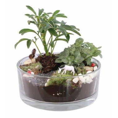Terrarium Bucuresti - florarie online - livrare flori