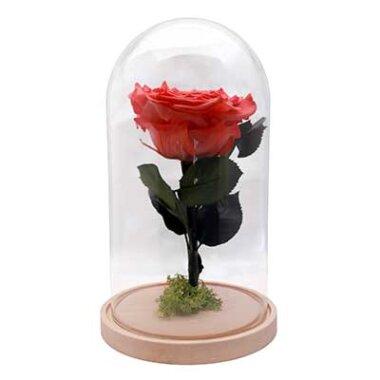 Cadou extravagant - trandafir criogenat