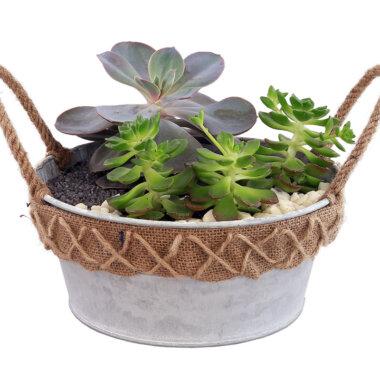 Florarie online - terrarium vintage - cadou perfect