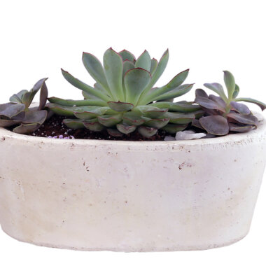 Buchet flori - florarie online - aranjament floral - terrarium