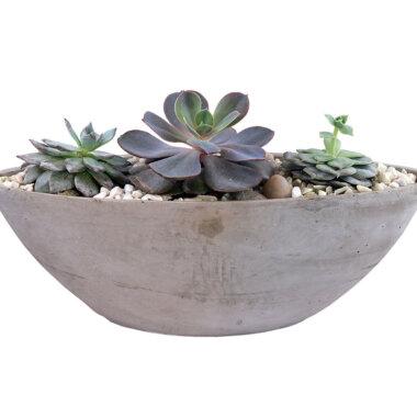 Terrarium Bucuresti - florarie online - livrare flori - plante suculente - cadou unic