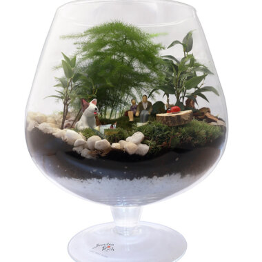 Terrarium unic - florarie online - livrare flori - flori naturale