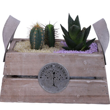 Buchet de flori - aranjament rustic - terrarium - cactus - aloe vera