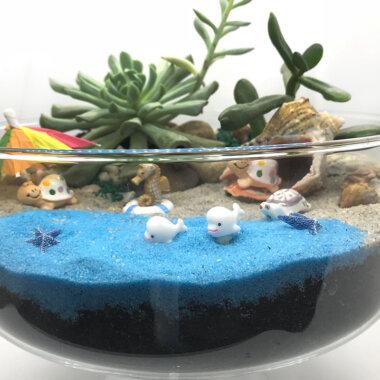 Mini gradina de vara - plante suculente - livrare online