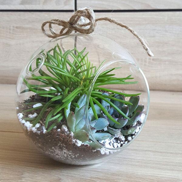 Terrarium - florarie online - livrari - minigradina