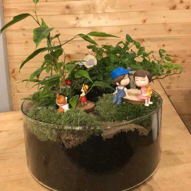 Terrarium - plante suculente - livrare flori - cadou unic