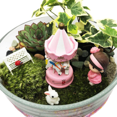 Terrarium, livrare flori Bucuresti, plante suculente, iedera