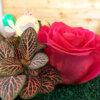 Terrarium - livrare flori Bucuresti - plante suculente - trandafiri