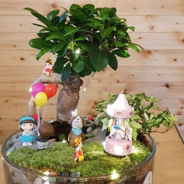 Terrarium Bonsai - Livrare Bucuresti