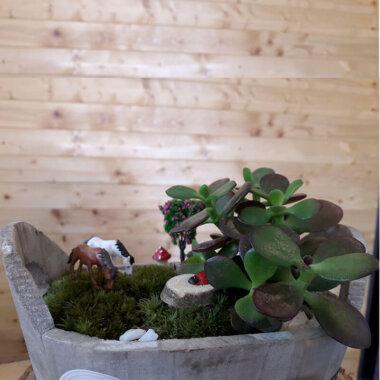 Plante Suculente - Terrarium Bucuresti