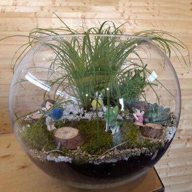Terrarium Bucuresti - Planta Pisicii