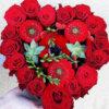 Trandafiri Rosii - Planta Suculenta