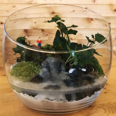 Terrarium - Plante suculente - Muschi