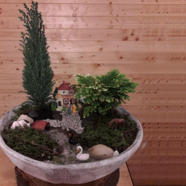 Terrarium Bucuresti - Plante naturale