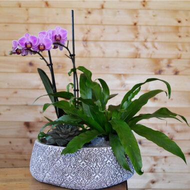 Terrarium mini orhidee Phalaenopsis