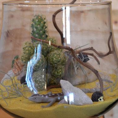 Terrarium Bucuresti Cactus - Livrare