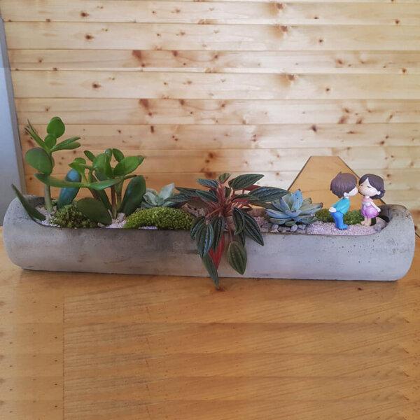 Terrarium plante suculente Bucuresti