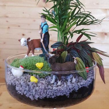 Terrarium plante suculente