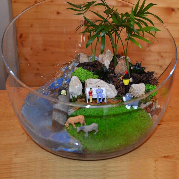 Terrarium Bucuresti - Plante suculente - Livrare