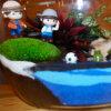 Terrarium muschi ball moss - Plante suculente