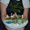 Terrarium bonsai - plante suculente - Livrare Bucuresti