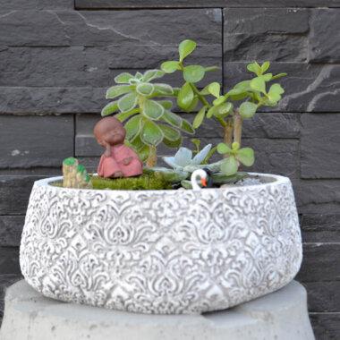 Terrarium plante suculente Buddha - Livrare Bucuresti