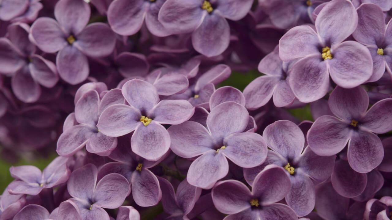 stefan_lulu_Garden_florarie_Bucuresti_!