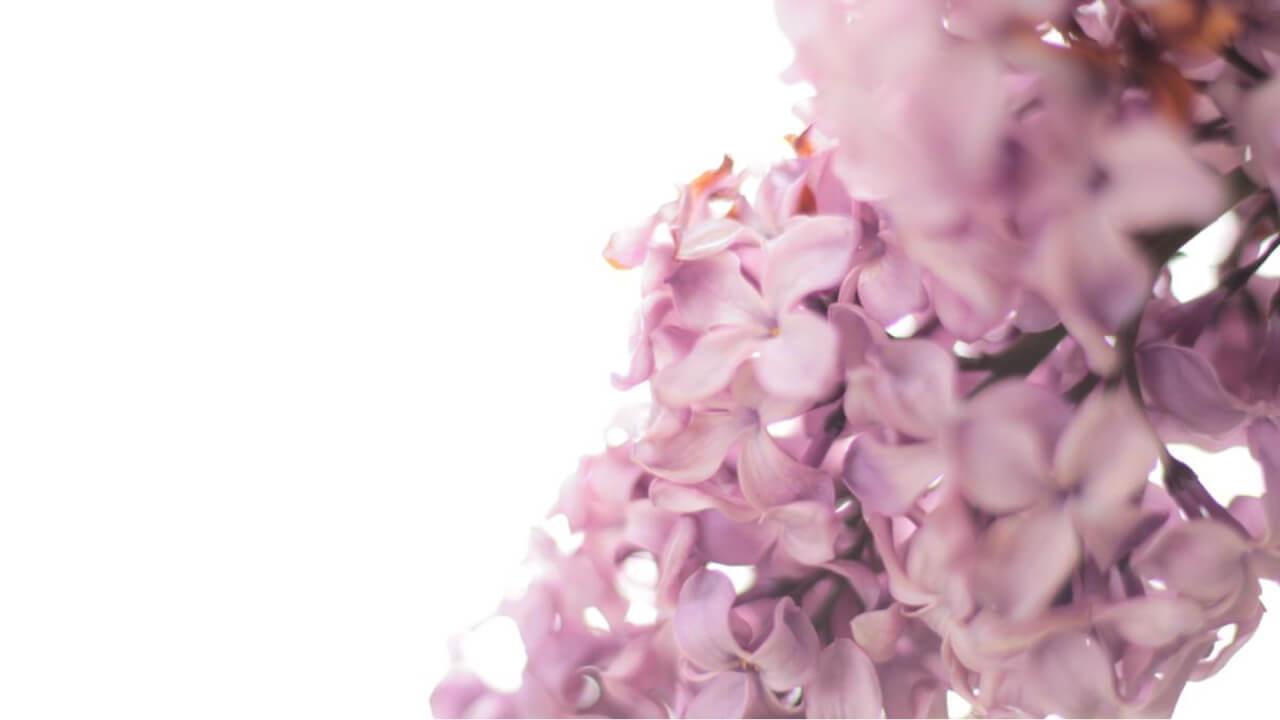 stefan_lulu_Garden_florarie_Bucuresti_1